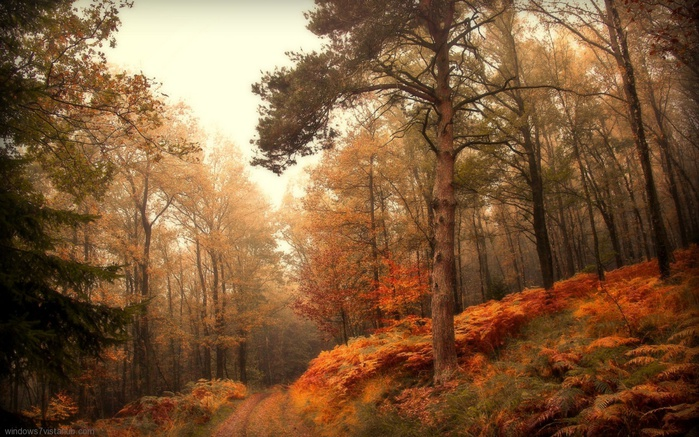 10840_Autumn_5 (700x437, 173Kb)