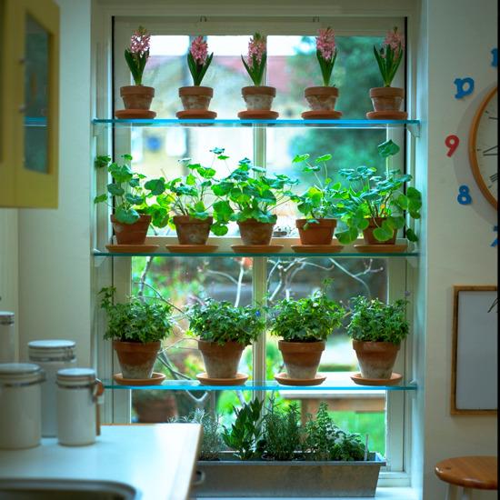 kitchen-shelves-greenhouse-shelves (550x550, 139Kb)