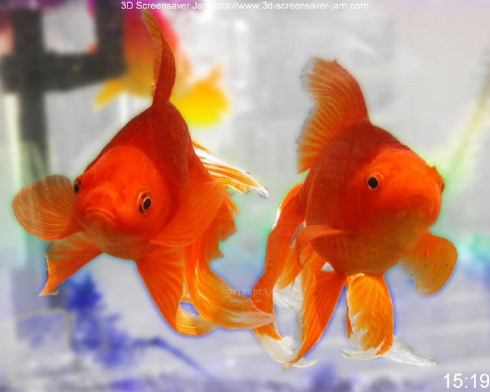 Free-Goldfish-Screensaver_1 (700x560, 93Kb)