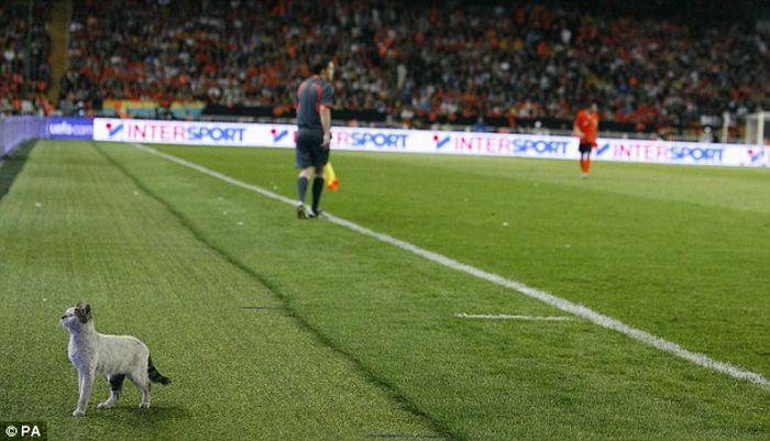 1243150867-kot-v-bolshom-futbole-6-foto_AddFun.ru_1 (700x401, 52Kb)