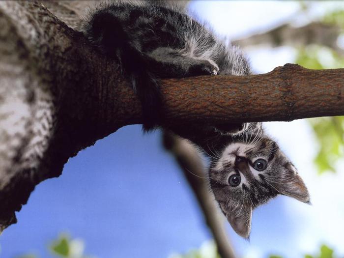 http://img1.liveinternet.ru/images/attach/c/2/73/516/73516797_cats_dra_0309__7_.jpg