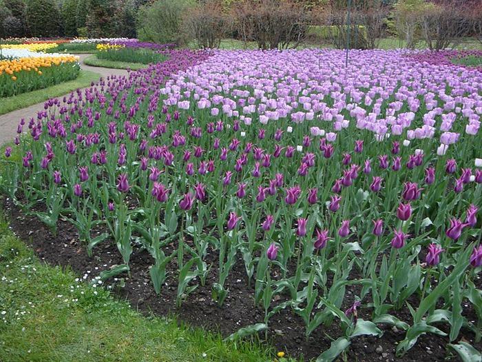 Сады Виллы Таранто 45460
