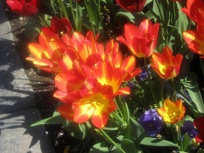 Сады Виллы Таранто 11626