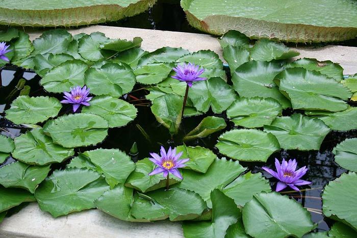 Сады Виллы Таранто 53622