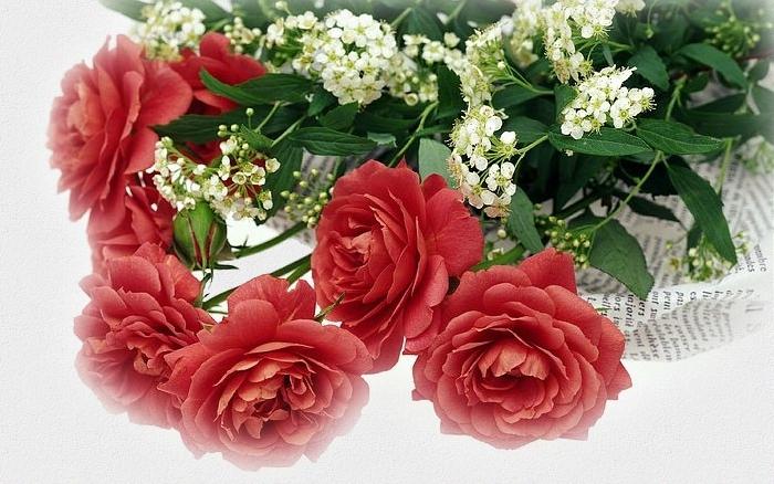 Розы для любимой мамы. momtop (700x438, 240Kb)