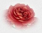 Розы для любимой мамы. momicon (136x105, 11Kb)