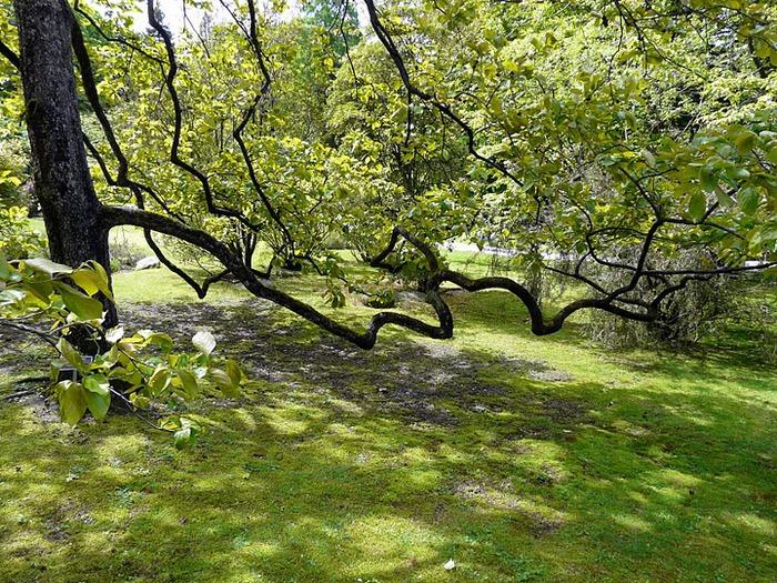 Сады Виллы Таранто 22321