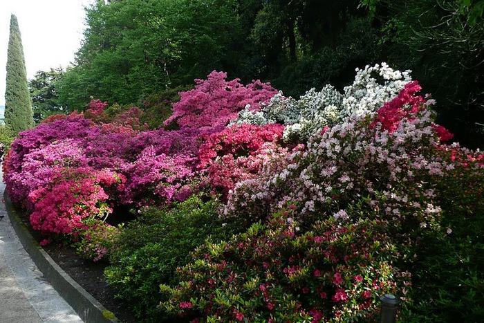 Сады Виллы Таранто 97976