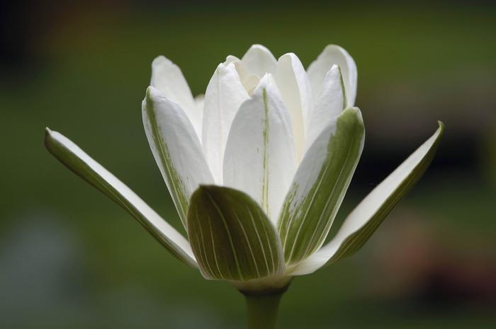 Рубрики цветы фото метки цветы макро