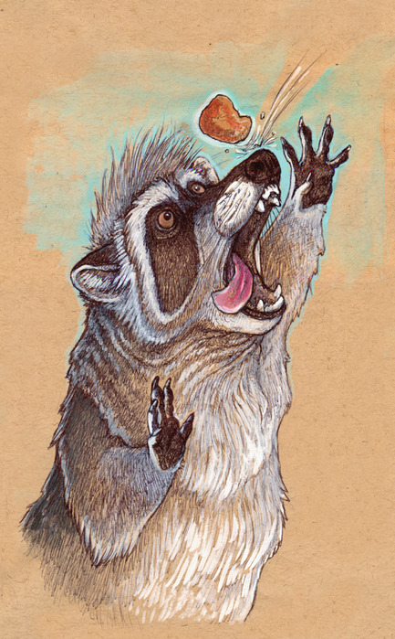 raccoon_nugget_by_caramitten-d30aqti (433x700, 151Kb)