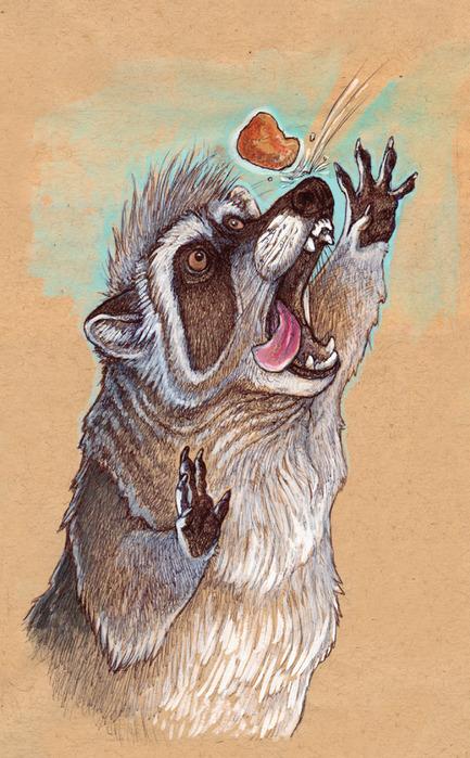 raccoon_nugget_by_caramitten-d30aqti (433x700, 151Kb)