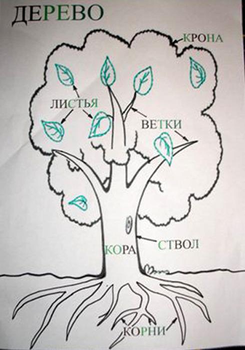 знакомство с деревьями 2 мл. гр
