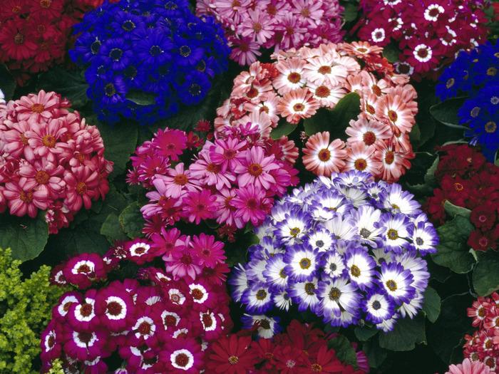 1600flower_9020 (700x525, 208Kb)