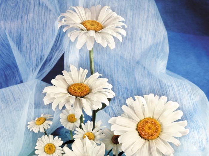 1600flower_24012 (700x525, 136Kb)