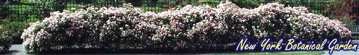 botanicalgarden3 (700x108, 28Kb)