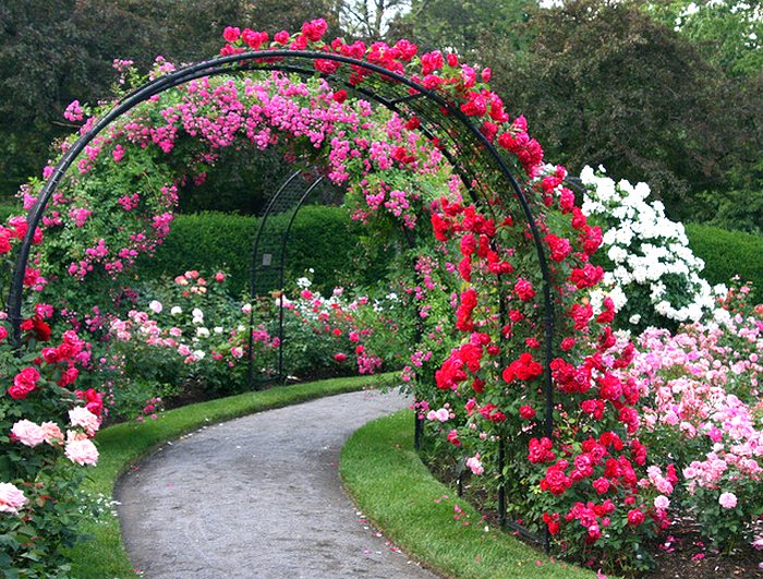 rose garden path  Flickr - Photo Sharing! (700x531, 1005Kb)