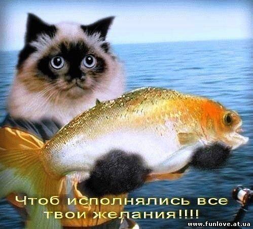 кот с рыбой (499x452, 55Kb)