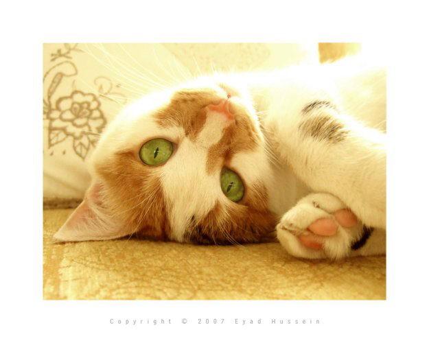 prikol_cats_69 (625x500, 36Kb)