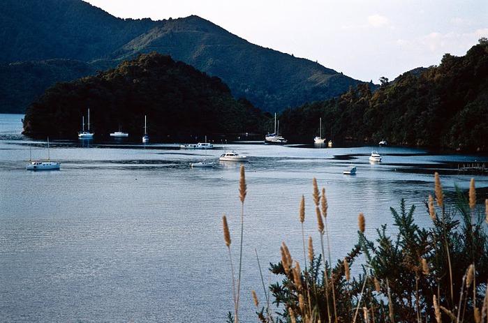 На Новой Зеландии 86936