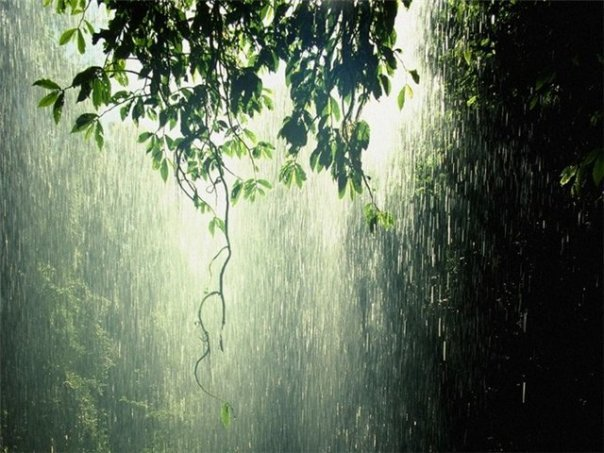 Июльский дождь (604x453, 69Kb)