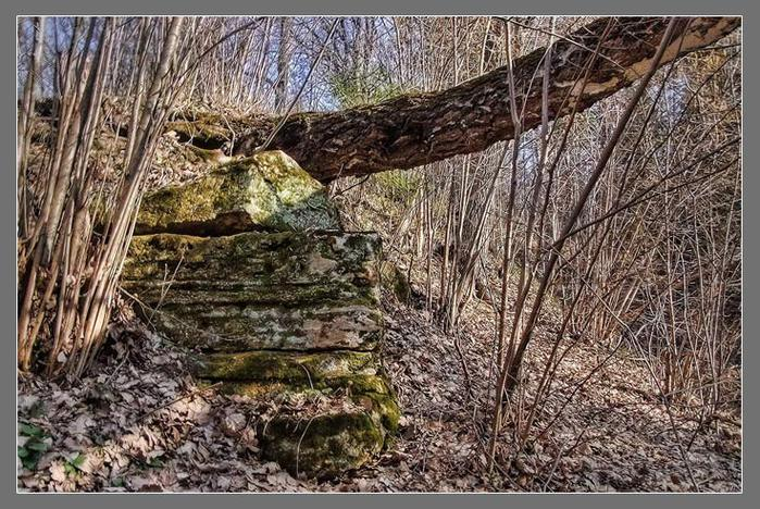 Выход известняковых пластов на поверхность. Васильевские каменовломни/3673959_5 (700x468, 113Kb)