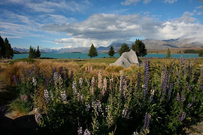 На Новой Зеландии 48134