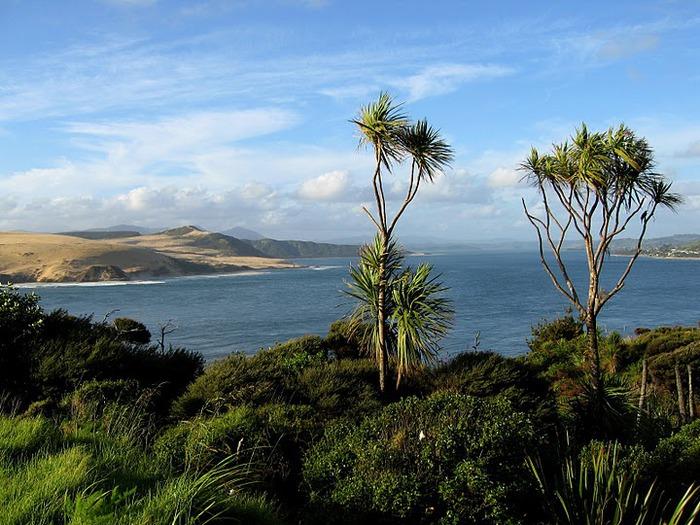 На Новой Зеландии 48653