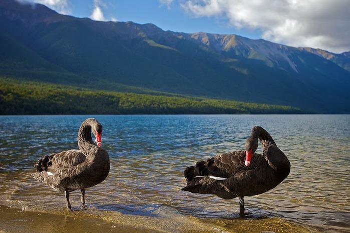На Новой Зеландии 32918