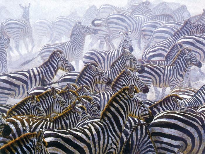 Zebras (700x525, 158Kb)