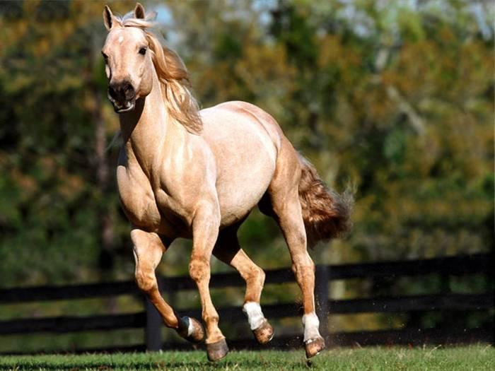 Horse (700x525, 44Kb)