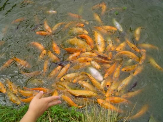 autres-animaux-autres-poissons-de-mer-autres-animaux-aquatiques-avranches-france-8718530536-875401 (550x412, 194Kb)