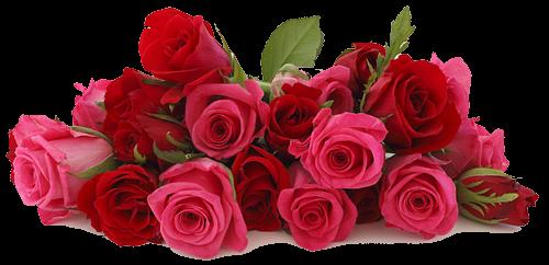 64072037_Rose_background_2 (500x242, 229Kb)