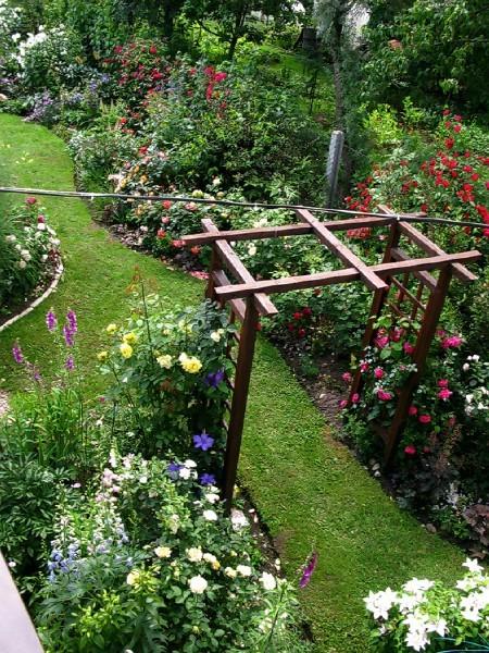 Садовые цветы и растения. 73812689_large_083_1_2