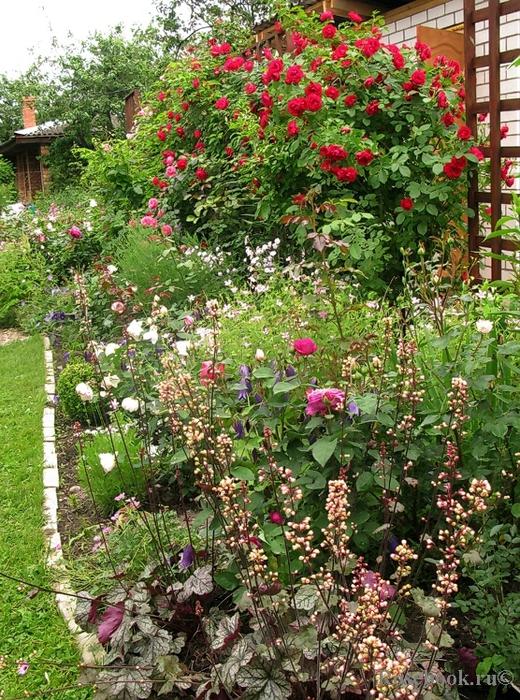 Садовые цветы и растения. 73812767_large_11087