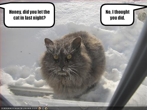 funny-pictures-your-cat-spent-the-night-outside (500x375, 29Kb)
