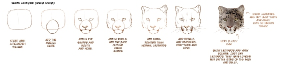 1615945_how_to_draw_big_cats_part_1_by_tamberellad3f2ibz (566x133, 36Kb)