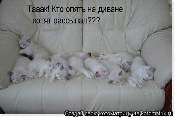 Рамые лучшие картинки и фото кошек и котят, фото приколы с кошками.
