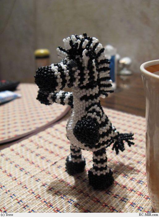 Зебра из бисера/3881963_zebra (514x700, 59Kb)