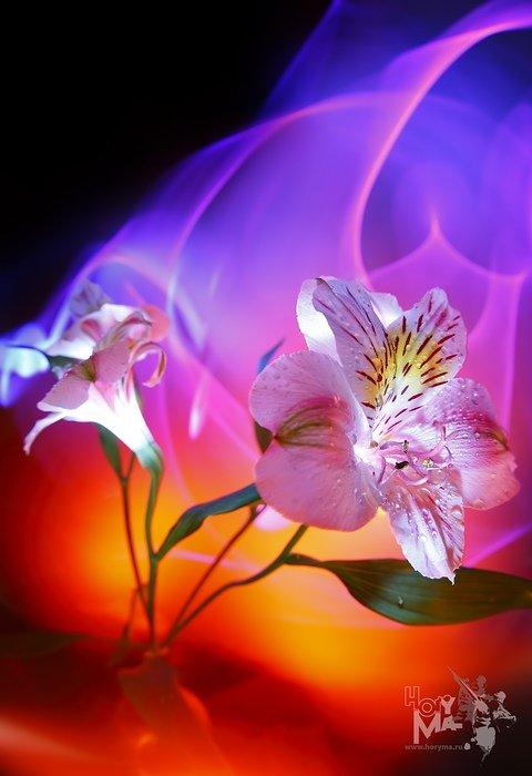 Красивые анимационные картинки цветы 2