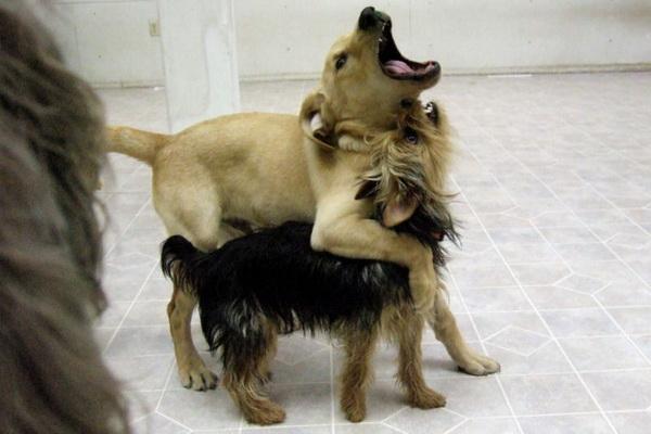 dog_3_72 (600x400, 74Kb)