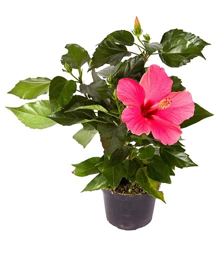 Искусственные растения, цветы и деревья крупным и мелким оптом.