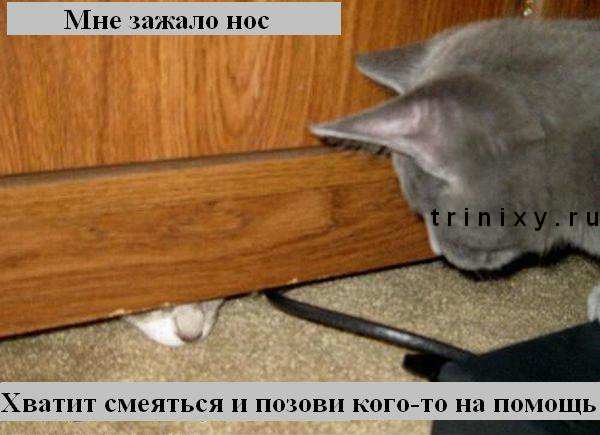 kotiki_37 (600x435, 50Kb)