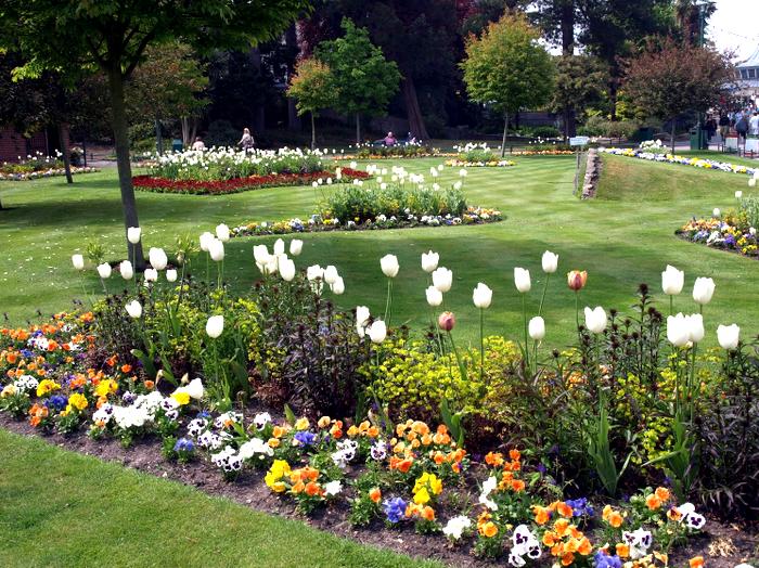 tulips.jpg (изображение «JPEG», 1600x1200 пикселов) - Масштабированное (46%) (700x524, 927Kb)