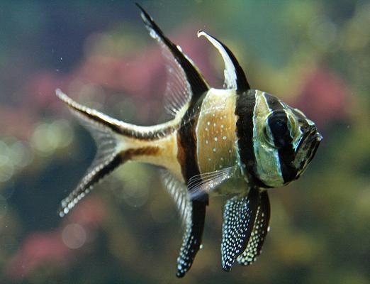 ryba morska (522x400, 29Kb)