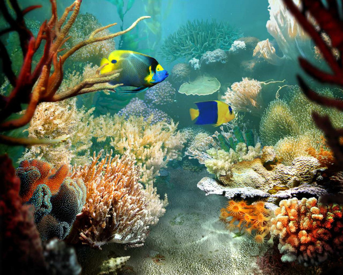 Tropical-Fish-3D-Photo-Screensaver_1 (700x560, 211Kb)