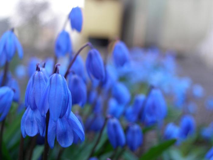 Цветы в бутонах фото