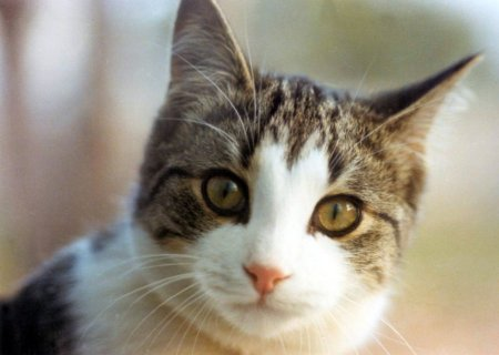 Cat (450x320, 23Kb)
