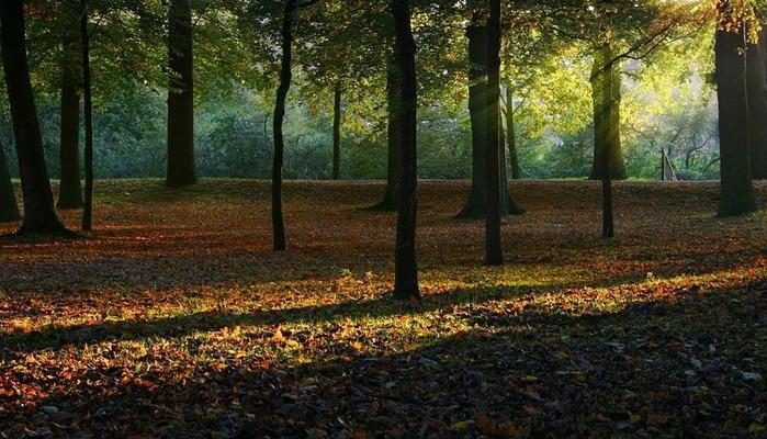 романтический пейзаж 11