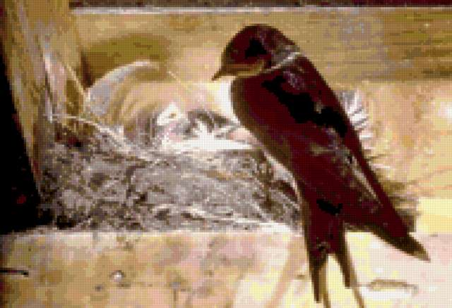 Фотография на тему.  Птицы фото ласточки.