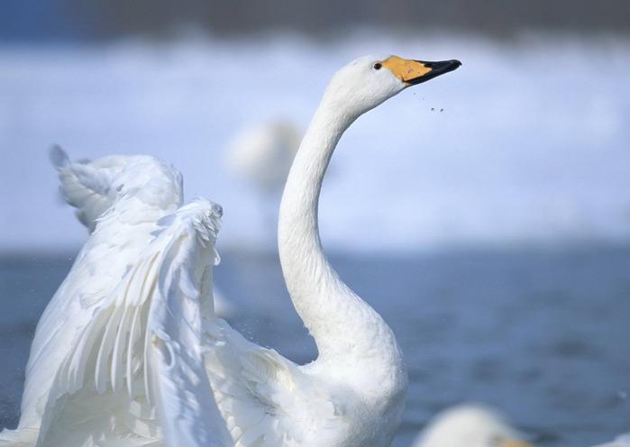 birds_2_077 (700x496, 64Kb)